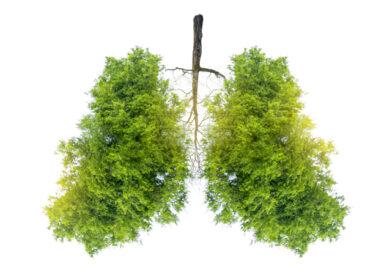 Können Pflanzen Krebs bekommen?